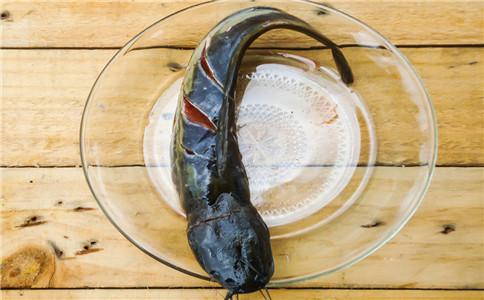 鲶鱼有什么营养 鲶鱼有什么功效 鲶鱼怎么做