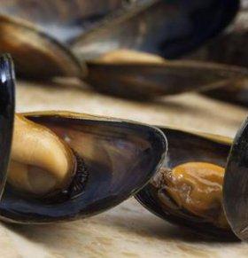 慎食赤潮地区贝类海鲜 监管部门的约束很重要
