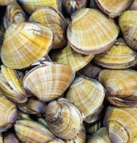 漳州贝类中毒患者好转 贝类毒素不好分辨