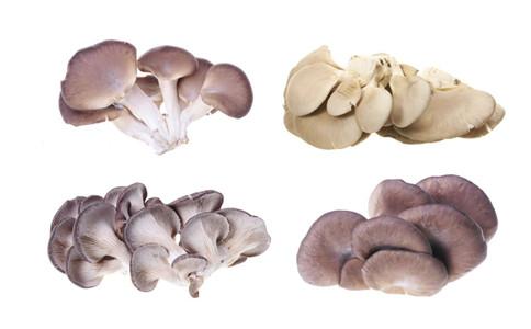 草菇有哪些营养功效 草菇的做法有哪些 草菇怎么做菜