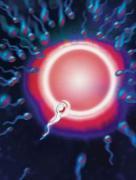 不排卵会有什么症状 预示不排卵的症状