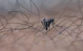 为何这么受蚊子欢迎 可能你是这5种人之一