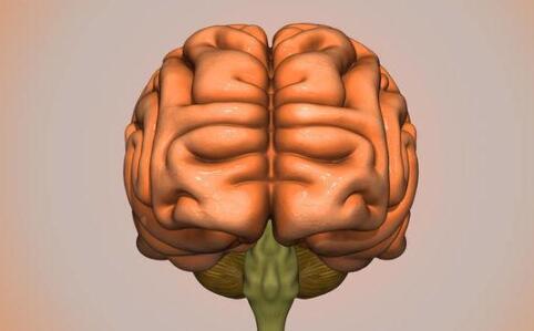 左撇子真的更聪明吗 左撇子和右脑的关系 右脑主要控制什么