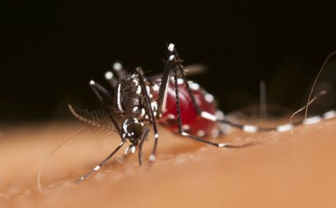荨麻疹如何预防 荨麻疹怎么预防 荨麻疹吃什么食物好