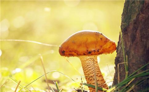 怎么辨别毒蘑菇 毒蘑菇有哪些 毒蘑菇的特点