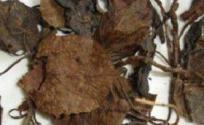 鹿衔草的功效与作用 鹿衔草是什么 鹿衔草的功效