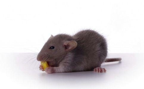 转基因食品 转基因食品谣言 转基因食品谣言真相
