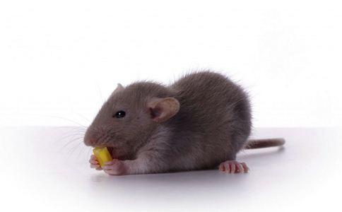 转基因食品谣言 十大转基因食品谣言 转基因食品谣言的真相