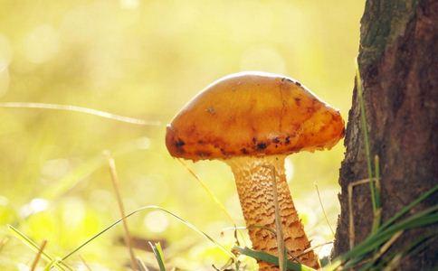 云南现巨型蘑菇 有毒蘑菇的危害 有毒蘑菇造成什么危害