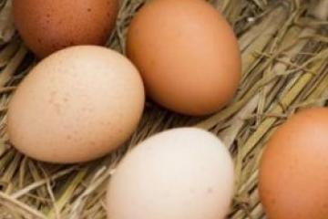 毒鸡蛋危害大吗?六大毒鸡蛋事件问答