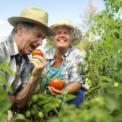 处暑养生方法 处暑要如何预防秋乏 秋燥怎么办