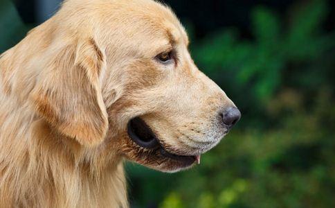 诊所为宠物做针灸理疗 针灸有什么好处 针灸的好处有哪些