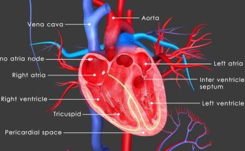 什么是心脏支架 心脏支架适用于哪些心脏病 心脏支架后应注意什么