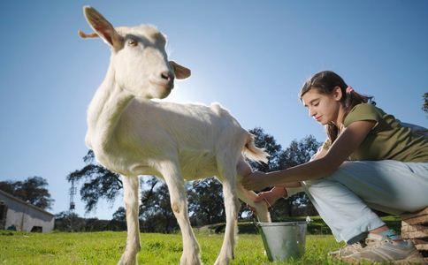 百只羊疑吃毒大葱 百只羊吃大葱死亡 如何预防农药中毒