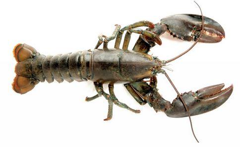 美国渔民捕获罕见龙虾 罕见透明龙虾 龙虾的营养价值