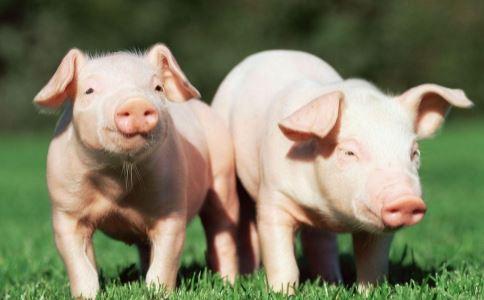 偷埋病死猪通报 偷埋病死猪事件 病死猪的危害
