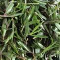 山马菜的营养价值 山马菜的功效与作用 山马菜的吃法