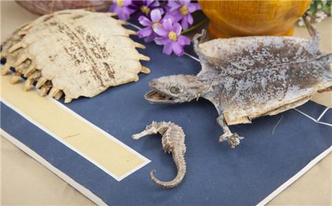 中华鳖的营养价值 中华鳖的做法 甲鱼药膳的做法