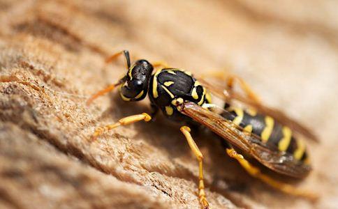 140人被野蜂蛰伤 蜜蜂蛰伤如何处理