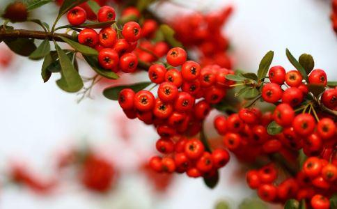 误食有毒野果中毒怎么办 常见的有毒野果有哪些 野果中毒怎么催吐