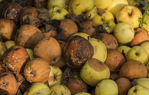 路边摊切好的水果尽量别吃 路边摊的水果不要吃 吃水果注意是什么