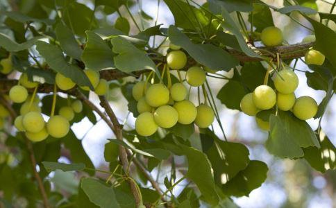 吃白果的好处 白果吃多中毒怎么办 白果吃多会中毒吗