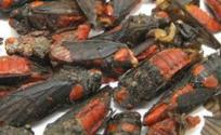 红娘虫的功效与作用 红娘虫是什么 红娘虫的功效