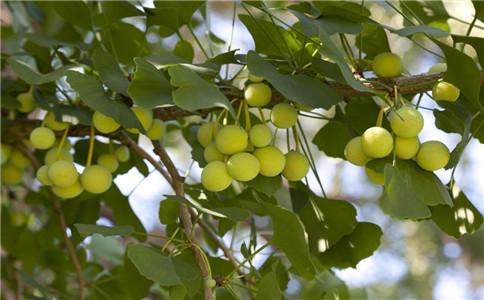 白果如何吃 白果的吃法 白果有什么功效