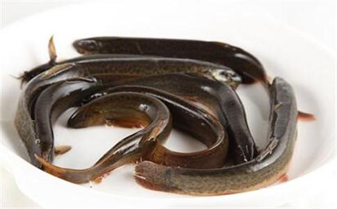 怎样做泥鳅汤 泥鳅汤的做法 泥鳅有什么功效