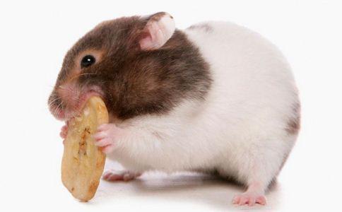 马达加斯加爆发鼠疫 马达加斯加鼠疫 肺炎性鼠疫