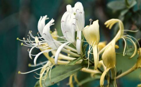 八种土法治疗胆结石