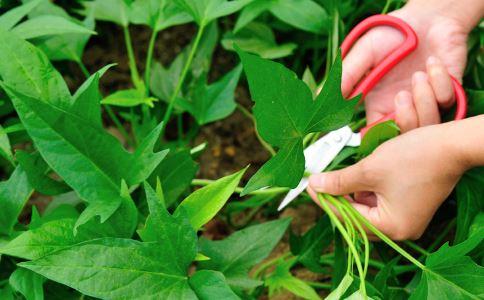 女人秋季排毒减肥吃什么好 秋季吃什么可以排毒 秋季排毒减肥的食物有哪些