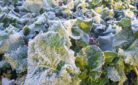 霜降如何养生 霜降注意什么疾病 霜降的养生方法