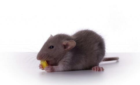男子口鼻流血不止被急救 如何避免老鼠药中毒 老鼠药中毒症状
