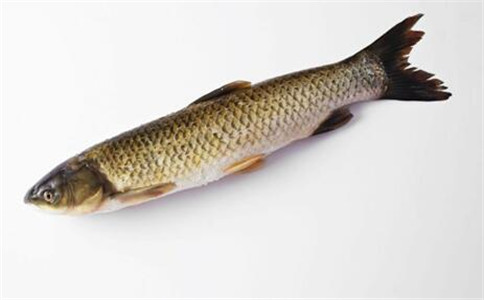 草鱼有什么营养功效 草鱼怎么做好吃 草鱼的做法