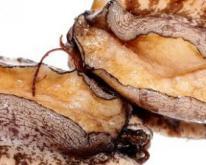 孕期补钙食谱 鲍鱼银耳汤的做法 鲍鱼银耳汤
