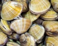 孕期补钙食谱 黄豆文蛤汤的做法 黄豆文蛤汤