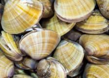 孕期补钙食谱,黄豆文蛤汤的做法,黄豆文蛤汤