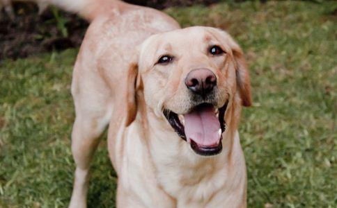 养狗能延缓衰老 如何延缓衰老 延缓衰老的方法