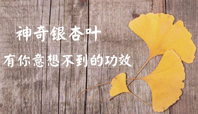 银杏叶的功效与作用 银杏叶有什么功效 银杏叶的作用是什么