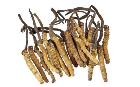 冬虫夏草功效有哪些 冬虫夏草有什么功效吗 冬虫夏草的功效与作用