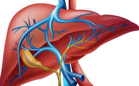 如何养肝 养肝的方法有哪些 怎么护肝才好