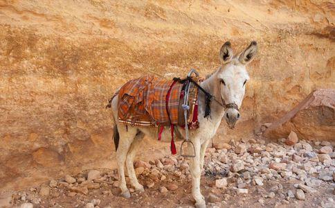 假驴肉销往北京 如何挑选驴肉 驴肉的挑选方法