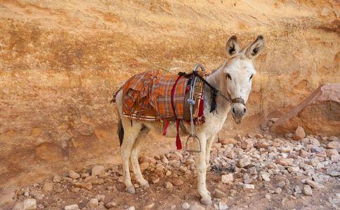 河间驴肉造假追踪 假驴肉销往北京 用猪肉马肉充当驴肉