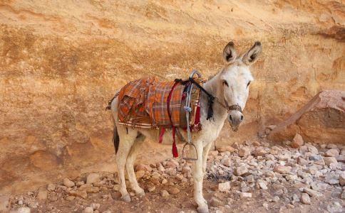 假驴肉加工厂污水横流 假驴肉销往北京 假驴肉事件