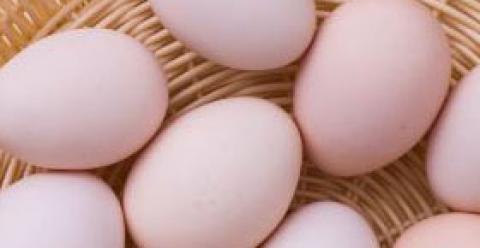 孕妇吃什么宝宝更聪明 孕妇吃鸡蛋 孕妇吃鸡蛋注意