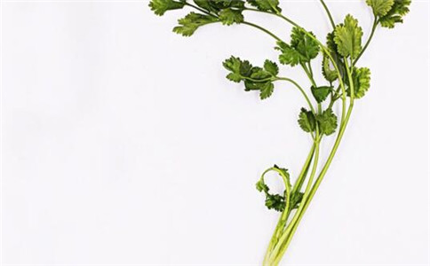香菜有什么功效 什么人不能吃香菜 香菜的营养功效