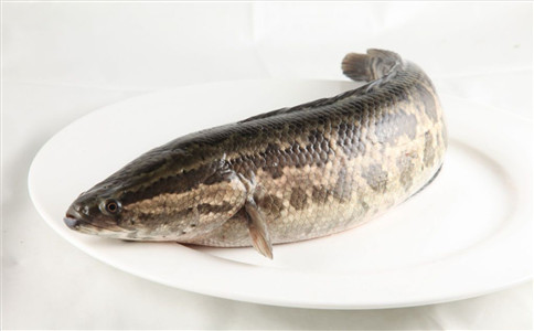 黑鱼的营养功效 黑鱼怎么吃 黑鱼的做法