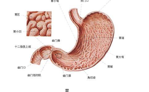 急性胃炎怎么办 如何预防急性胃炎 急性胃炎的治疗方法