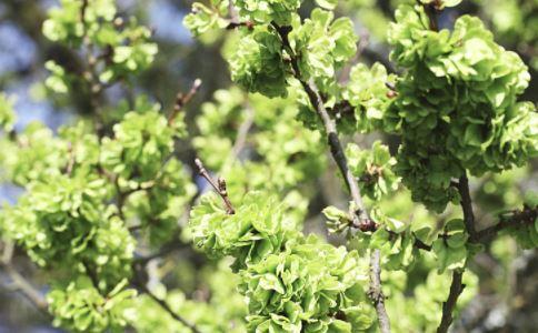 春季易发生哪些疾病 春季养生要注意什么 女性春季如何养生